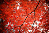 Fall Colors in Japan Fotodruck von  jdphotography
