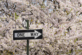 Usa, New York, New York City, One Way Sign among Cherry Trees in Blossom Photographic Print by Tetra Images