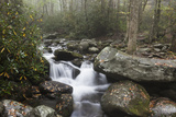 Usa, Tennessee, Smoky Mountains National Park, Stream in Forest Photographic Print by Henryk Sadura