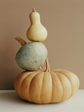 A Pumpkin and Two Gourds. Photographic Print by Victoria Pearson