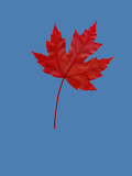Red Maple Leaf Photographic Print by Russell Illig