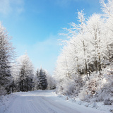 Christmas Morning. Snowy Winter Forest and Knurled Wide Trails. Photographic Print by  kavram