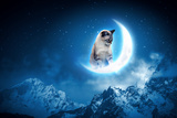 Image of Cat in Jump Catching Moon Photographic Print by Sergey Nivens