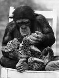 Feeding Cub Photographic Print by Ian Tyas
