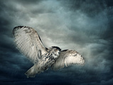 Flying Owl Bird at Night Reproduction photographique par  egal