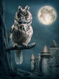 Owl Bird Sitting on Branch at Night Fotoprint van  egal
