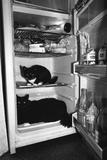 Cool Cats Reproduction photographique par Graham Morris