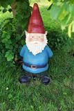 Garden Gnome Looking at Camera Reproduction photographique par  Mirage3
