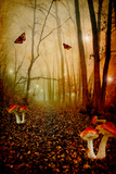 Fairy Forest Photographic Print by  udvarhazi