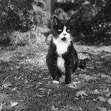 Winnie the Cat Photographic Print by Aubrey Hart