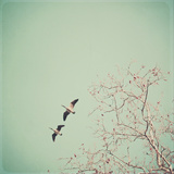 Two Geese Migrating Photographic Print by Laura Ruth