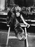 Orangutan Photographic Print