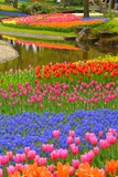 Spring Color Photographic Print by  M.Arai