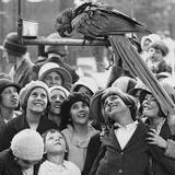 Show off Parrott Stampa fotografica di Hulton Archive