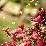 Pink Flower Photographic Print by  RoxiRosita