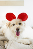 Dog Wearing Toy Ears on Bed Photographic Print by  Emely