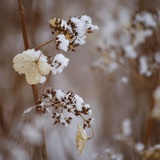 Winter Garden Photographic Print by Marie-Josee Levesque