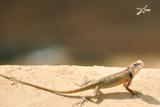 Lizards Photographic Print by Shahzeb Nasir
