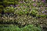 Vertical Garden Detail Photographic Print by Carlos Sanchez Pereyra