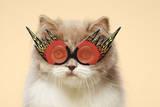 Persian Cat Wearing Flaming Eye Glasses Photographic Print by GK Hart/Vikki Hart