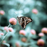 Butterfly in Green and Red Garden Photographic Print by JP Benante
