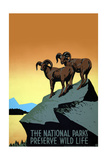 National Parks Preserve Wild Life Posters by J. Hirt