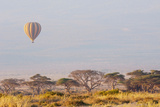 Hot Air Balloon Floating above Acacia Trees with Mount Kilimanjaro Backdrop. Amboseli National Park Photographic Print by Cultura Travel/Philip Lee Harvey