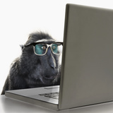 Monkey Wearing Spectacles Using Laptop Computer Photographic Print by Andrew Bret Wallis