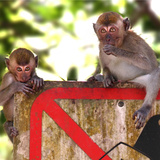 Monkey Stock Photography Photographic Print by seng chye teo