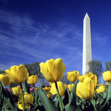 Tulips and the Washington Monument, Washington DC Photographic Print by Hisham Ibrahim