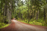 Scenic Image of Road Going through Redwood National Park, Ca. Photographic Print by Justin Bailie