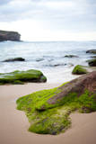 Lichen on Rock at Wattamolla Beach Photographic Print by Will Tan