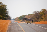 Zebra Crossing Photographic Print by Marcus Visic