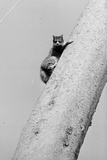 Cat up Tree Photographic Print by Mike Moore