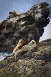 Buy Sea Lion for $10.99 Photographic Print by Daniel Cummins