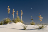 Yucca in White Sands National Monument Photographic Print by Russell Burden