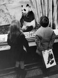 Panda Watch Photographic Print by Evening Standard