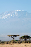 Mount Kilimanjaro behind Acacia Trees, Amboseli National Park, Kenya Fotografisk tryk af Cultura Travel/Philip Lee Harvey