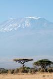 Mount Kilimanjaro behind Acacia Trees, Amboseli National Park, Kenya Photographic Print by Cultura Travel/Philip Lee Harvey