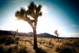 Usa, California, Joshua Tree National Park, Hidden Valley, Joshua Trees Photographic Print by Sergio Pitamitz