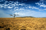 Ancient Dead Tree on the Serengeti Plain Photographic Print by David Cayless