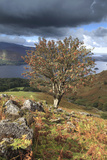 Rowan Tree Ashness Fell, Lake District Photographic Print by Dave Porter Peterborough Uk
