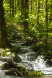 Radiant Water, Smokies Photographic Print by Jerry Whaley