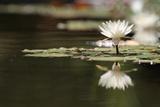 Reflection Lotus Flower Photographic Print by Hayati Kayhan