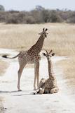 Giraffe Photographic Print by  obliot