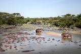 Hippopotamus (Hippopotamus Amphibius) Photographic Print by  JoSon