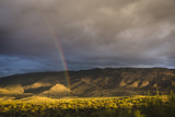 Double Rainbow, Saguaro National Park. Photographic Print by David Madison