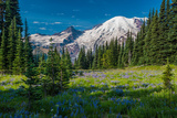 Summer on Mount Rainier Photographic Print by  KarlsJohnson.com