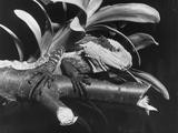 Water Lizard Photographic Print by William Vanderson
