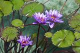 Garden Flowres Prints by  xdrew
